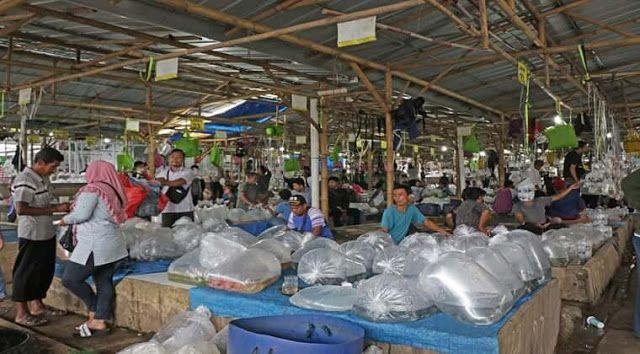 Local Guides Connect Parung Ornamental Fish Market Bogor Indonesia Local Guides Connect