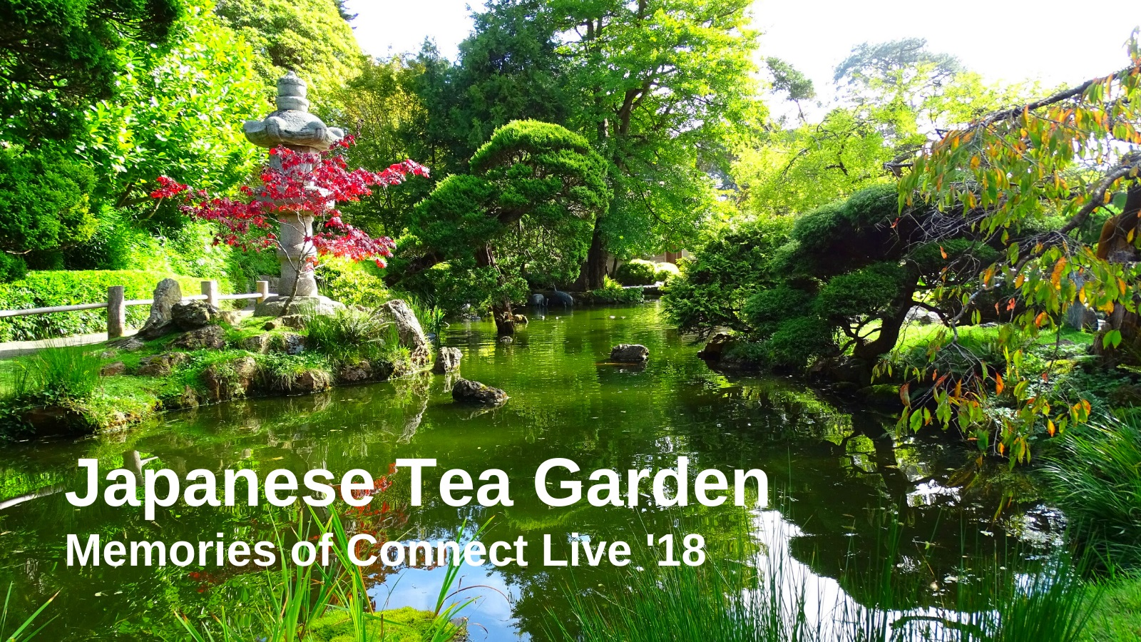 Local Guides Connect A Visit To The Japanese Tea Garden San Francisc Local Guides Connect