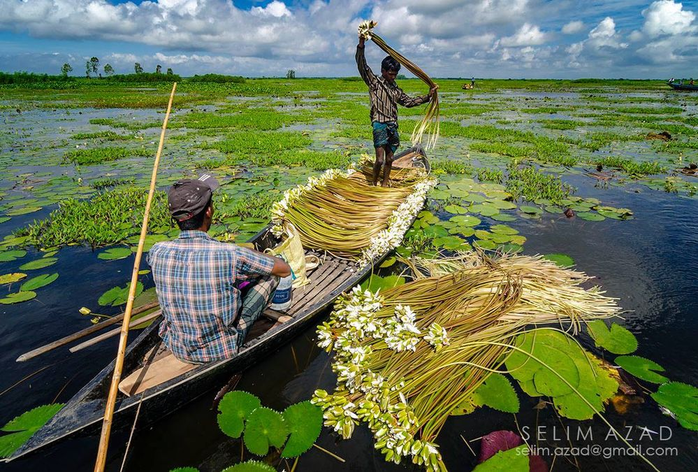 the rainy season of bangladesh The physical geography of bangladesh is varied and has an area characterised by two distinctive features: a broad deltaic plain subject to frequent flooding, and a small hilly region crossed by swiftly flowing rivers.