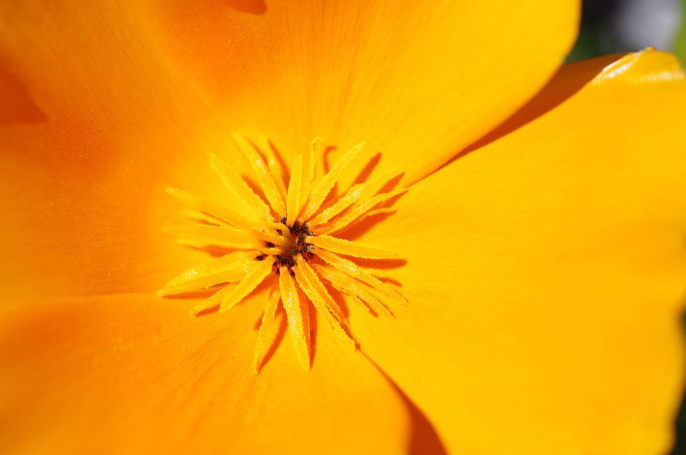 Pollen1.jpg