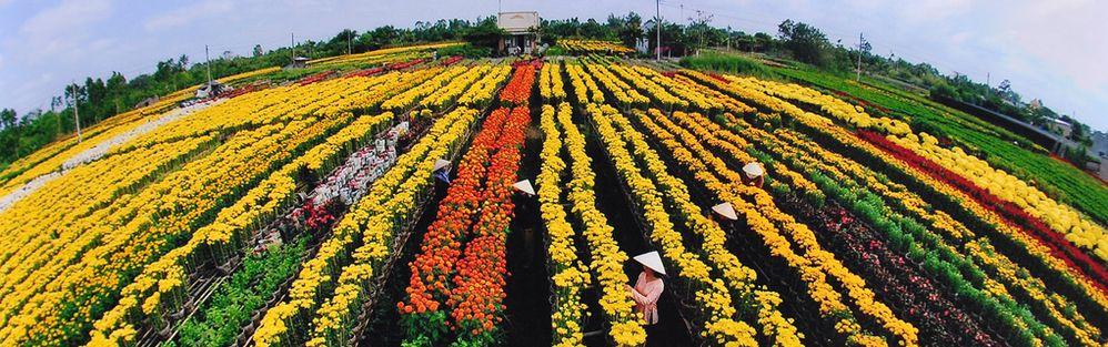 Làng hoa kiểng Tân Qui Đông - Sa Đéc