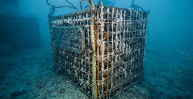 Cava-submarina.jpg