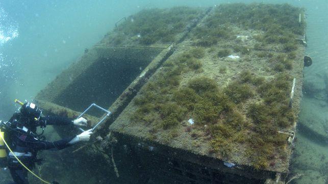 muestras-arrecife-artificial-Bajoelagua-Factory_EDIIMA20140423_0647_4.jpg