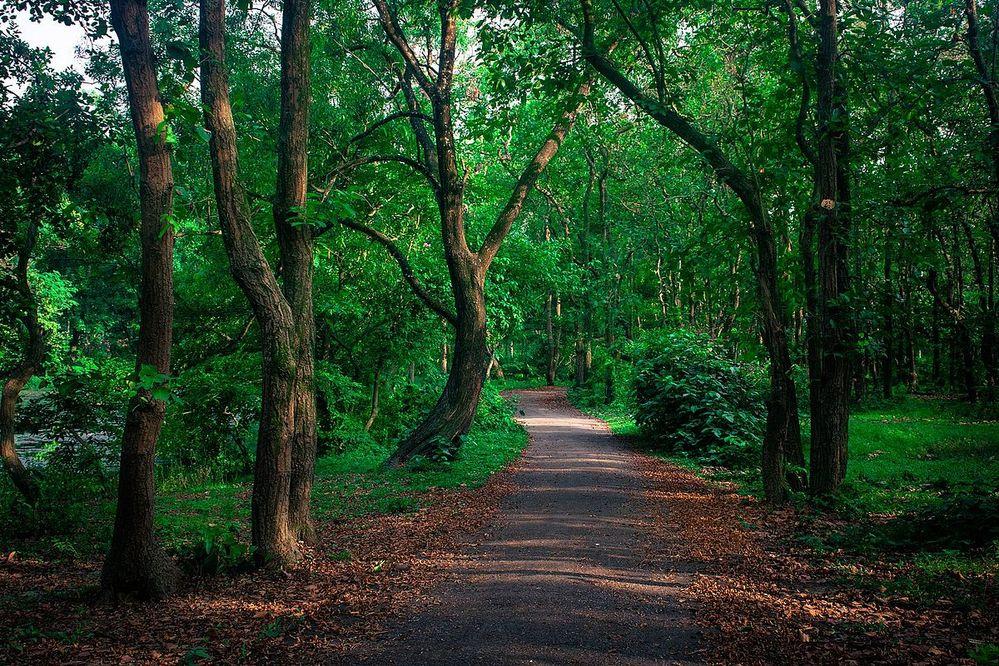 A_Road_of_Bhawal_Nationa_Park,_Gazipur.jpg