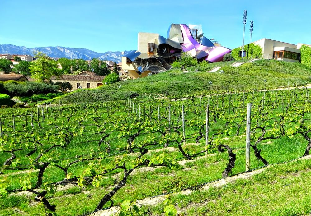 Spanish winery.JPG
