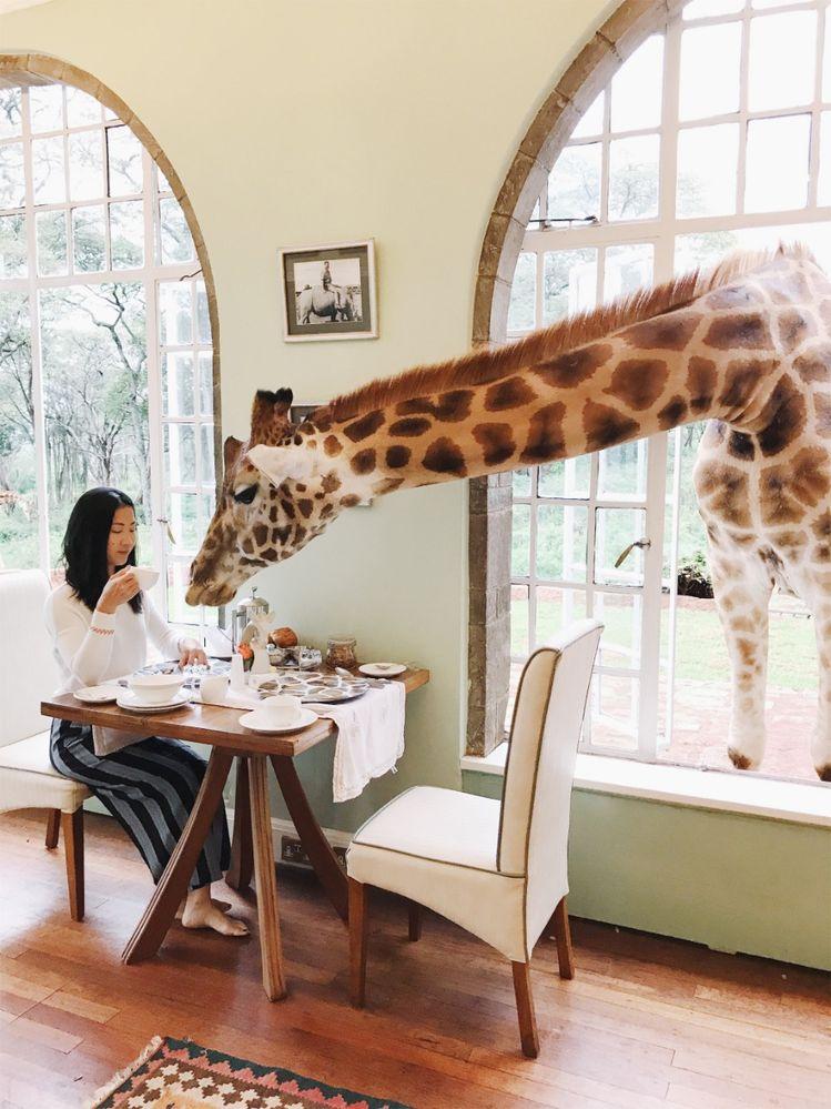 LGJenny Liu_GiraffeManor.jpeg