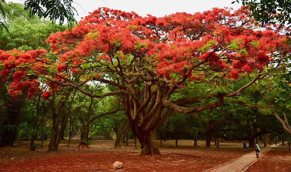 2.-LG-Monish_Bhorali-Cubbon-Park-Bangalore-India-1000.jpg