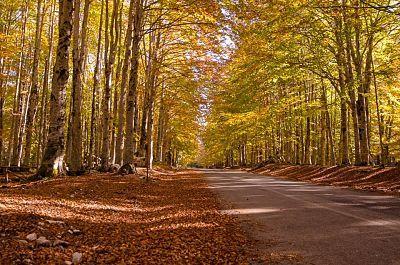 livata autunno.jpg