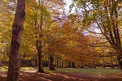 livata autunno1.jpg