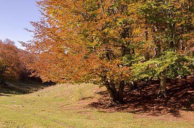 livata autunno2.jpg