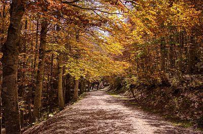 livata autunno3.jpg