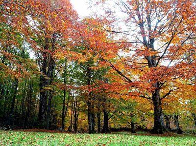 livata autunno11.jpg