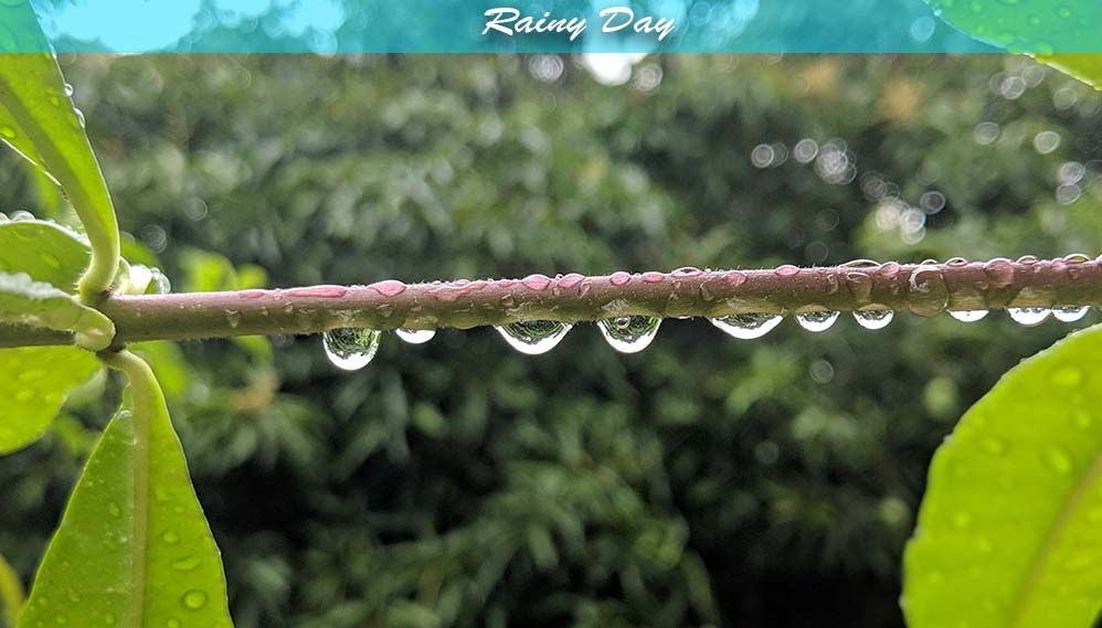 1. rainy day.jpg