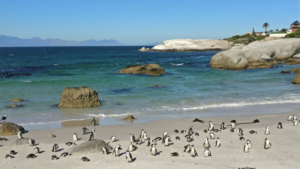 penguin beach.jpg