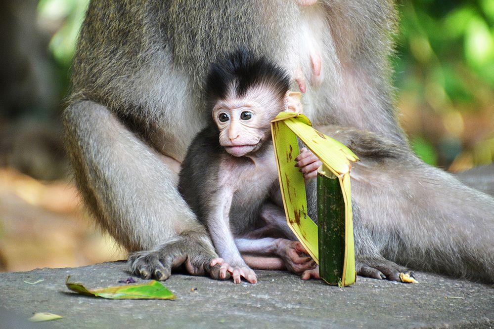 POTW-1.28.19-Sacred-Monkey-Forest-Sanctuary-1000.jpg