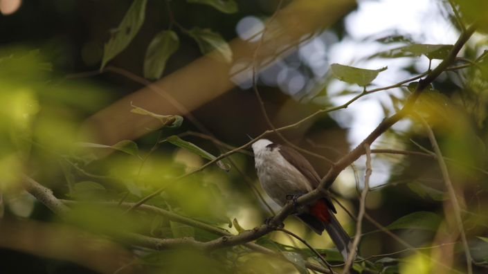 Local Guides Connect - Bird Sanctuary in Kolkata (Chintamoni