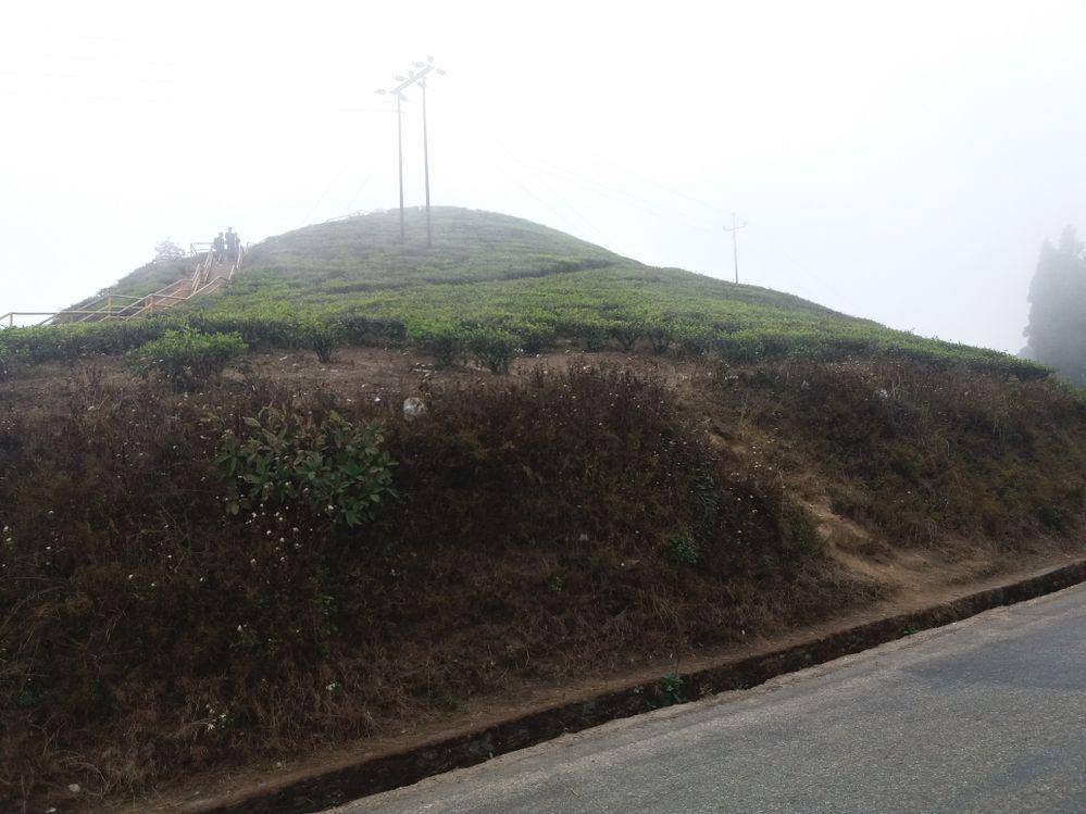 Tea Garden in Kanyam