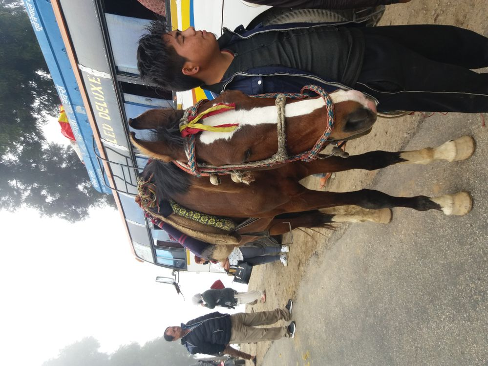 Horse Owner Waiting for Tourist Riders