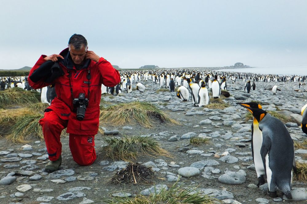 Curiosity of the Penguines