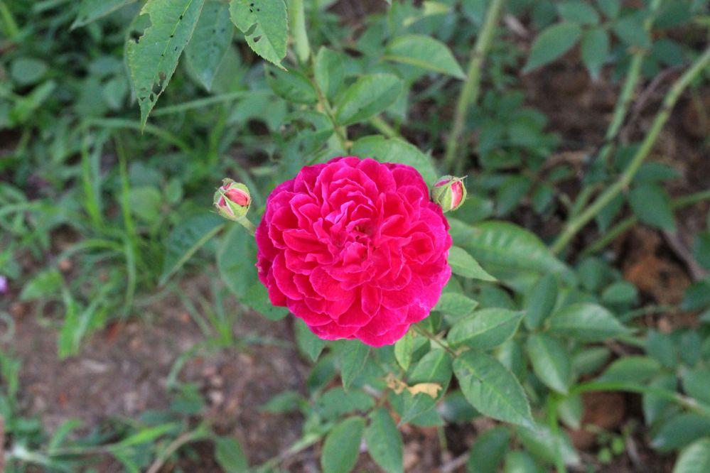 36 Flower Shot